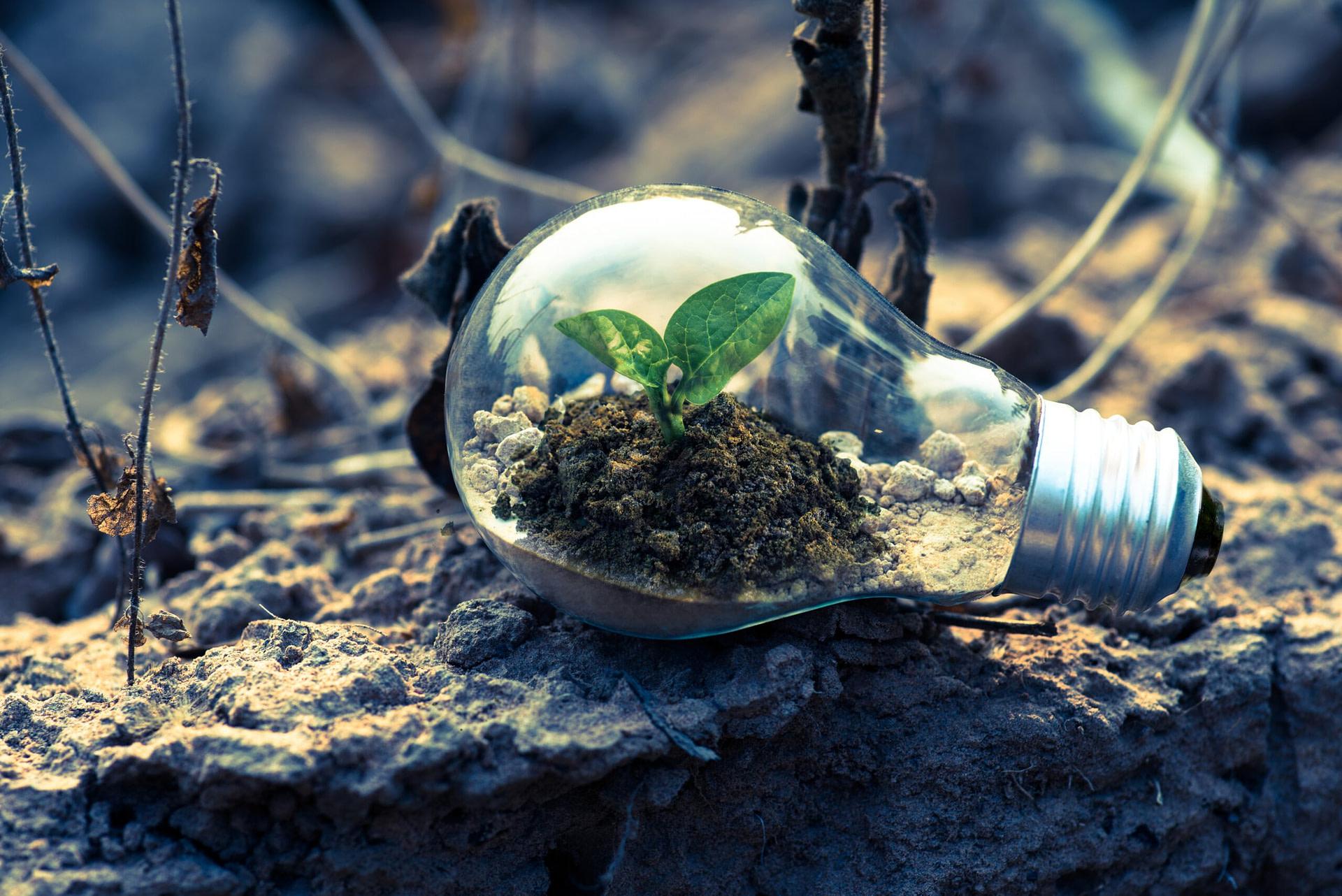 samenwerking Van uitdaging naar kans – Deel 1: samenwerking en verbinding clear light bulb planter on gray rock 1108572 scaled